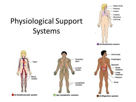 Physiological Support Systems