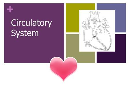 + Circulatory System. + Do Now Why is it important for your heart to continue beating even when you're sleeping? What does your body need? What are some.