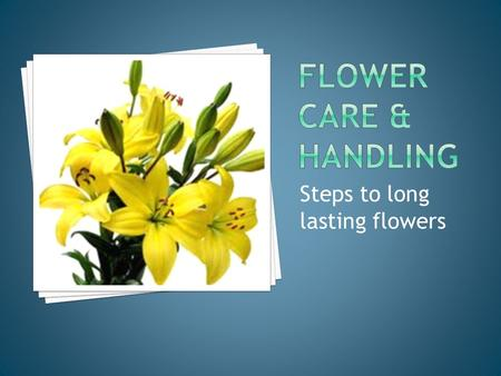 Steps to long lasting flowers.  to get the longest life possible out of the flower  customers are pleased when they buy quality flowers  promising.