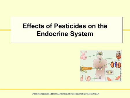 Pesticide Health Effects Medical Education Database (PHEMED) Effects of Pesticides on the Endocrine System biology.clc.uc.edu.