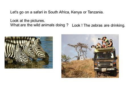Look at the pictures. What are the wild animals doing ? Look ! The zebras are drinking. Let's go on a safari in South Africa, Kenya or Tanzania.