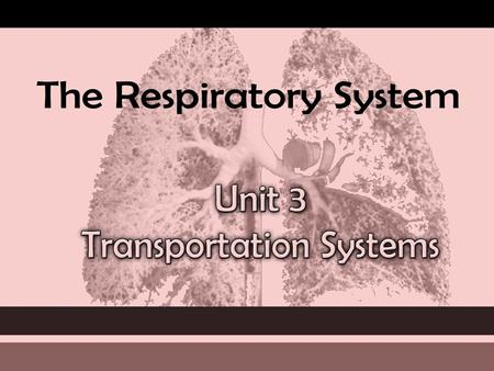 The RESPIRATORY System Unit 3 Transportation Systems.