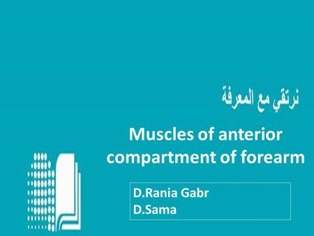 Muscles of anterior compartment of forearm D.Rania Gabr D.Sama.