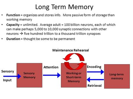 Long Term Memory Function = organizes and stores info. More passive form of storage than working memory Capacity = unlimited. Average adult = 100 billion.