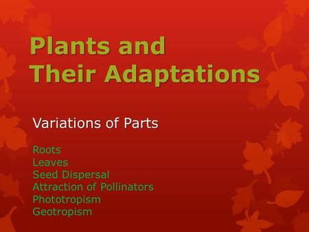 Plants and Their Adaptations Variations of Parts Roots Leaves Seed Dispersal Attraction of Pollinators Phototropism Geotropism.