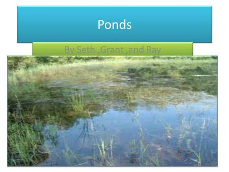 Ponds By Seth ,Grant ,and Ray.