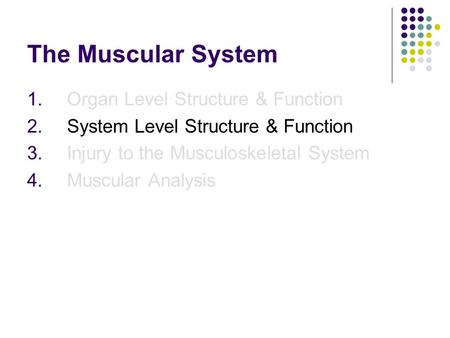 The Muscular System 1.Organ Level Structure & Function 2.System Level Structure & Function 3.Injury to the Musculoskeletal System 4.Muscular Analysis.