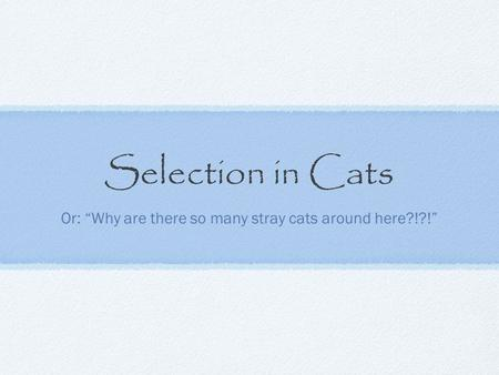 "Selection in Cats Or: ""Why are there so many stray cats around here?!?!"""