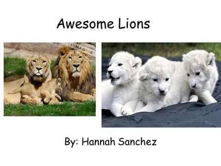 Awesome Lions By: Hannah Sanchez. Table of Contents Introduction…………..………….1 Lions……….……………………..…….2 How do lions grow?…………...3 What do lions look like?