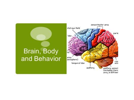 Brain, Body and Behavior. Focus Questions  How do the different hemispheres of the brain function?  Where are significant parts of the brain and what.