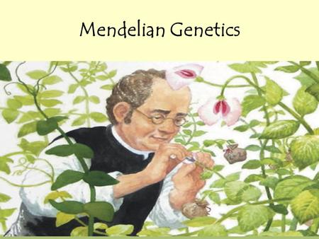 Mendelian Genetics. Genetics and heredity For a long time, general ideas of inheritance were known ++ =