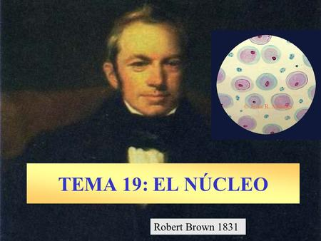 TEMA 19: EL NÚCLEO Robert Brown 1831.