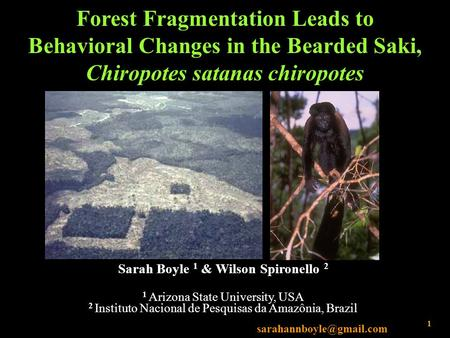 Forest Fragmentation Leads to Behavioral Changes in the Bearded Saki, Chiropotes satanas chiropotes Sarah Boyle 1 & Wilson Spironello 2 1 Arizona State.