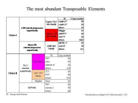 Classification according to M.J. Daboussi and al. 2003 TE : Transposable Element The most abundant Transposable Elements.