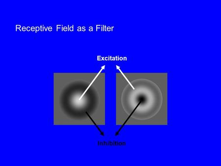 Receptive Field as a Filter Excitation Inhibition.