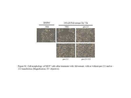 NEGpre-221 pre-222pre-221/222 NEG DMSO 100 nM Fulvestrant for 72h Figure S1. Cell morphology of MCF7 cells after treatment with fulvestrant, with or without.