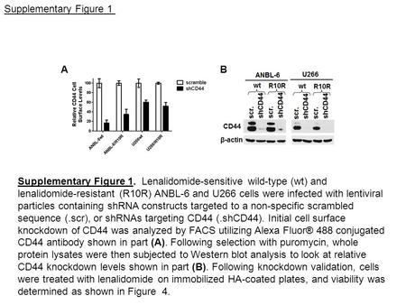 A B Supplementary Figure 1 Supplementary Figure 1. Lenalidomide-sensitive wild-type (wt) and lenalidomide-resistant (R10R) ANBL-6 and U266 cells were infected.