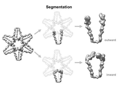 Segmentation outward inward. Three Conformations Myosin-V with ADP (PDB - 1W7I) pre-power stroke state in scallop muscle (PDB - 1QVI) F-actin pre-power.