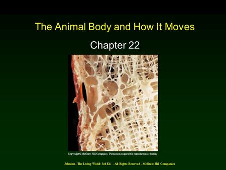 Johnson - The Living World: 3rd Ed. - All Rights Reserved - McGraw Hill Companies The Animal Body and How It Moves Chapter 22 Copyright © McGraw-Hill Companies.