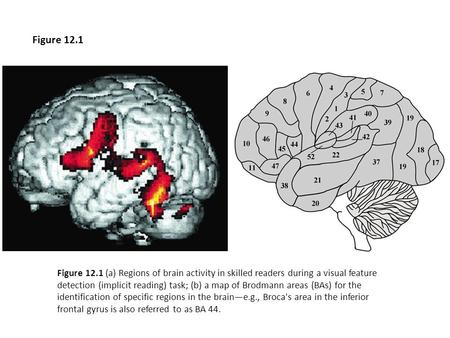 Figure 12.1 (a) Regions of brain activity in skilled readers during a visual feature detection (implicit reading) task; (b) a map of Brodmann areas (BAs)