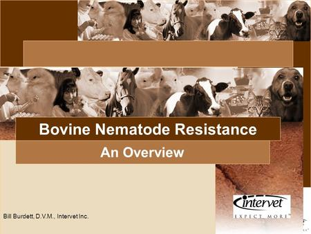 Introduction Bill Burdett, D.V.M., Intervet Inc. Bovine Nematode Resistance An Overview.