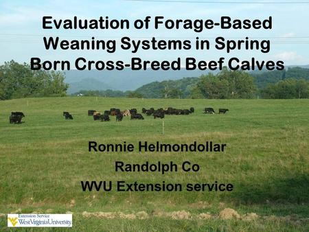Evaluation of Forage-Based Weaning Systems in Spring Born Cross-Breed Beef Calves Ronnie Helmondollar Randolph Co WVU Extension service.