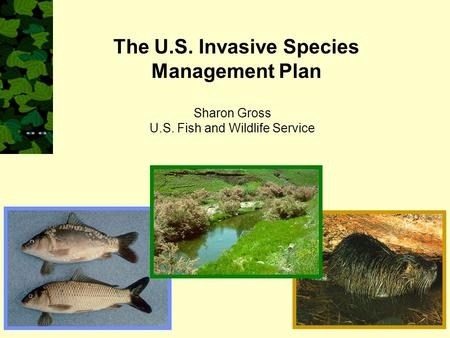 Sharon Gross U.S. Fish and Wildlife Service The U.S. Invasive Species Management Plan.