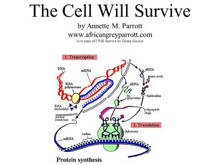 The Cell Will Survive by Annette M. Parrott www.africangreyparrott.com to to tune of I Will Survive by Gloria Gaynor.