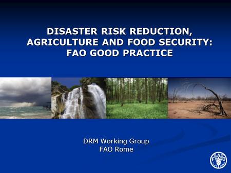 DRM Working Group FAO Rome