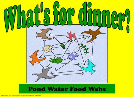 Pond Water Food Webs What's for dinner?