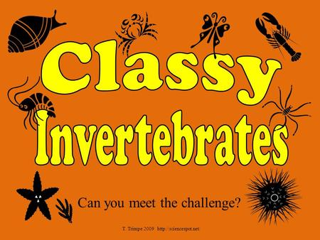 Classy Invertebrates Can you meet the challenge?