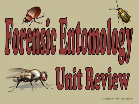 T. Trimpe 2009 http://sciencespot.net/ Forensic Entomology Unit Review T. Trimpe 2009 http://sciencespot.net/