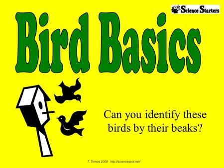 Can you identify these birds by their beaks?