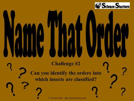 Challenge #2 Can you identify the orders into which insects are classified? T. Trimpe 2008