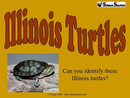 Can you identify these Illinois turtles? T. Trimpe 2008