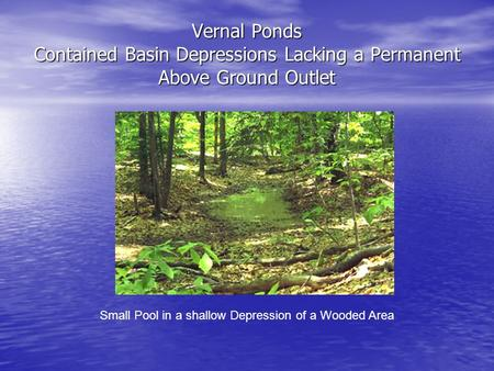 Vernal Ponds Contained Basin Depressions Lacking a Permanent Above Ground Outlet Small Pool in a shallow Depression of a Wooded Area.