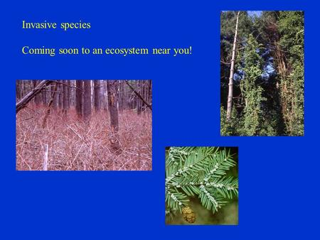 Invasive species Coming soon to an ecosystem near you!