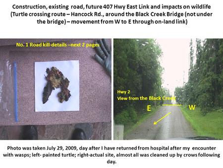 Construction, existing road, future 407 Hwy East Link and impacts on wildlife (Turtle crossing route – Hancock Rd., around the Black Creek Bridge (not.
