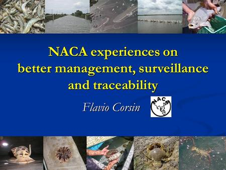Flavio Corsin NACA experiences on better management, surveillance and traceability.
