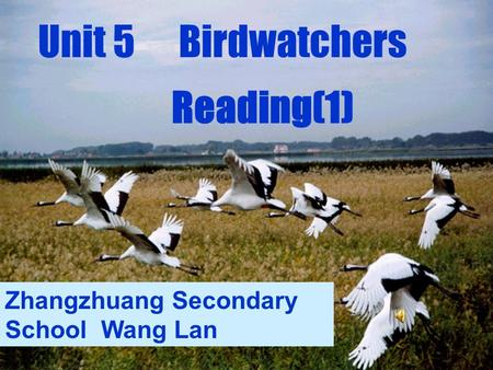 Unit 5 Birdwatchers Reading(1) Zhangzhuang Secondary School Wang Lan.