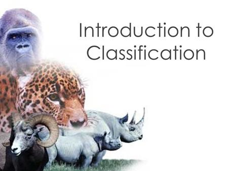 Introduction to Classification. A. What is taxonomy ? The branch of biology that groups organisms based on common characteristics. I. Introduction B.