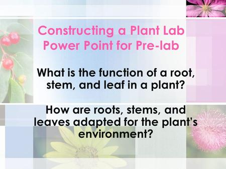 Constructing a Plant Lab Power Point for Pre-lab