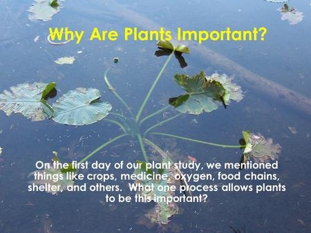 Why Are Plants Important? On the first day of our plant study, we mentioned things like crops, medicine, oxygen, food chains, shelter, and others. What.