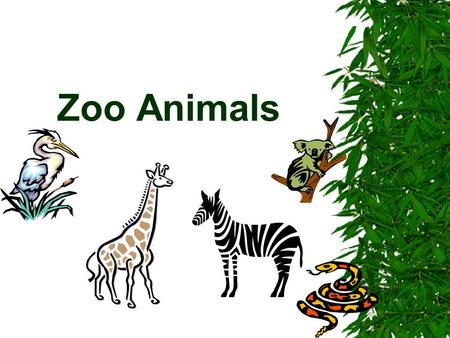 Zoo Animals.