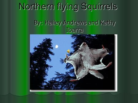 Northern flying Squirrels By: Hailey Andrews and Kathy Ibarra.