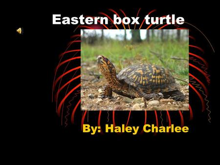 Eastern box turtle By: Haley Charlee Habitat They live in wooded area to moist forest area with plenty of underbrush or near shallow water and at the.