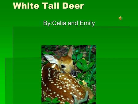 White Tail Deer By:Celia and Emily Habitat They live in Grandfather Mountin. They live in Grandfather Mountin. They also live in the US, Canada, Mexico,
