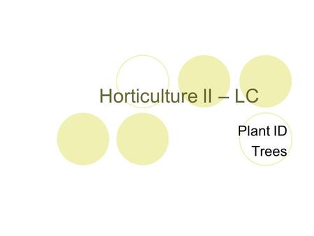 Horticulture II – LC Plant ID Trees. Acer palmatum Common Name: Japanese Maple Small, deciduous tree Wide, palmate, deeply lobed leaves Fruit: Samara.