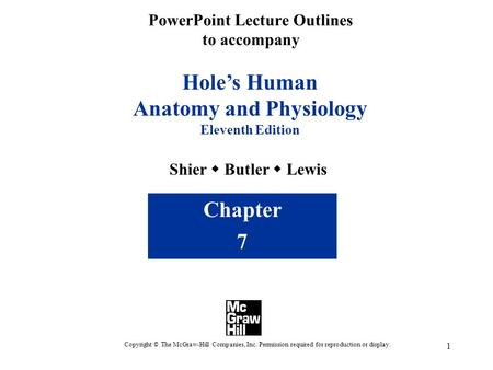 1 PowerPoint Lecture Outlines to accompany Holes Human Anatomy and Physiology Eleventh Edition Shier Butler Lewis Chapter 7 Copyright © The McGraw-Hill.