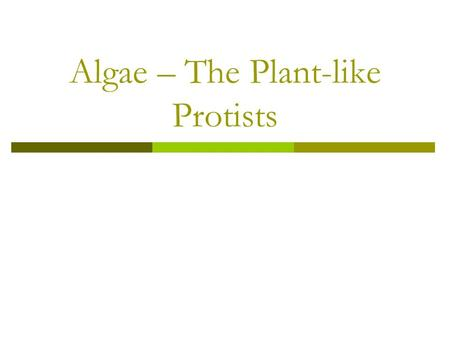 Algae – The Plant-like Protists. Plant-like Protists Contain chlorophyll located in chloroplasts. Most make their own food through photosynthesis. Many.